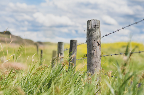 Cowboy's Road