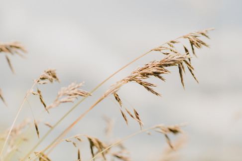 Stormy Wheat