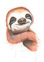 sloth jpg.jpg