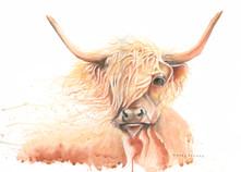 highland cow jpg.jpg