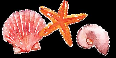 seashells.png