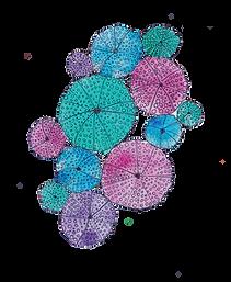 sea urchin-01.png