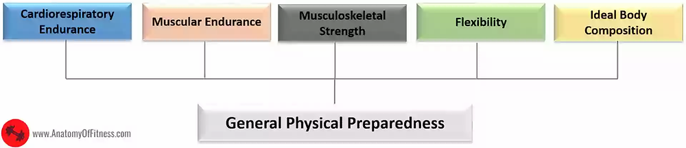 Components of FITNESS which relate to GENERAL PHYSICAL PREPAREDNESS.