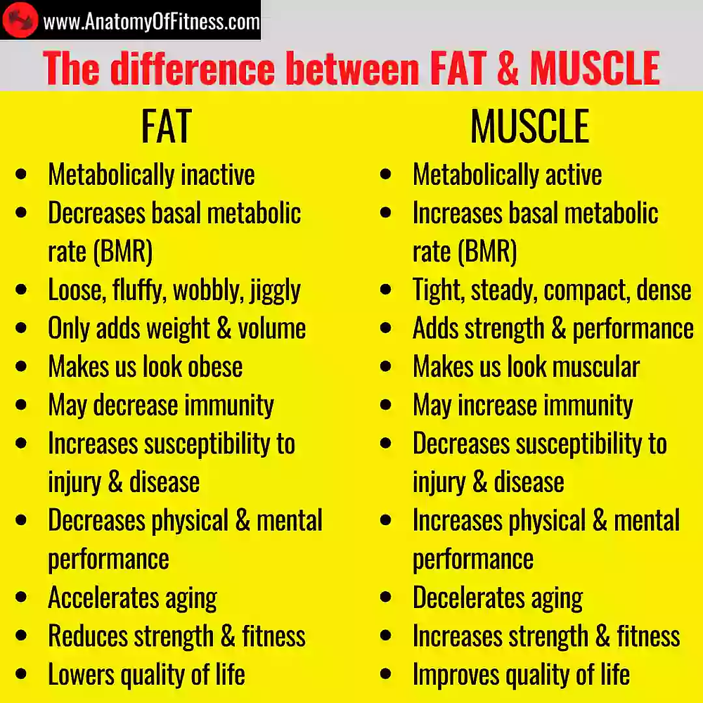 Difference between FAT and MUSCLE.