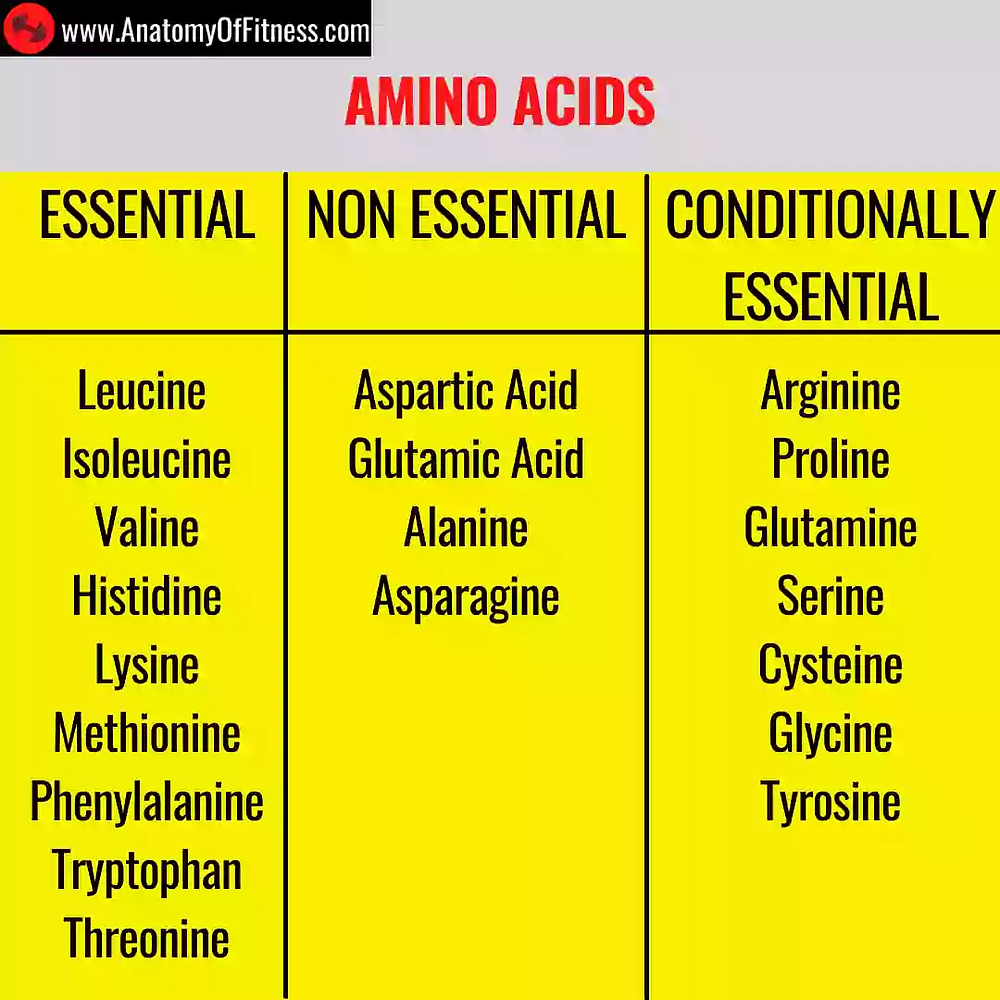 Essential, non-essential and conditionally essential amino acids chart.