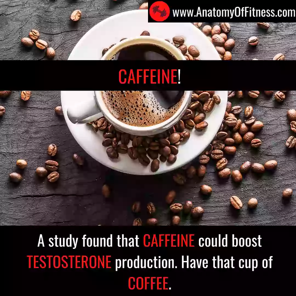 CAFFEINE increases TESTOSTERONE.