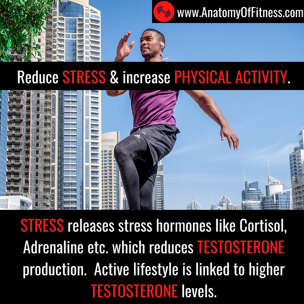 Stress reduces TESTOSTERONE production. An active lifestyle increases TESTOSTERONE production.