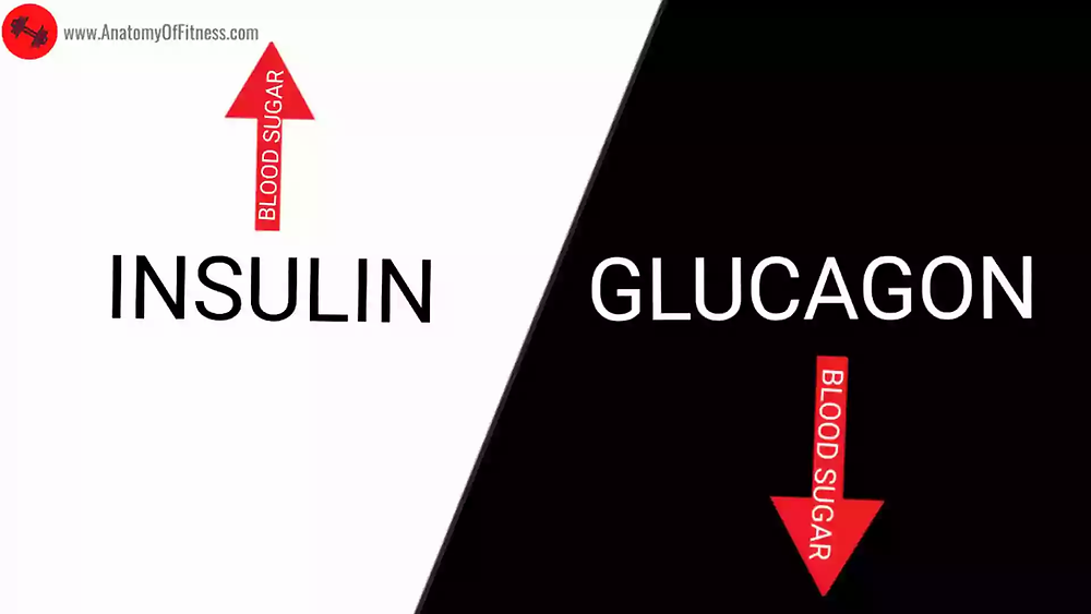 INSULIN and GLUCAGON relationship.
