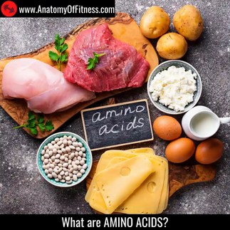 What are AMINO ACIDS?