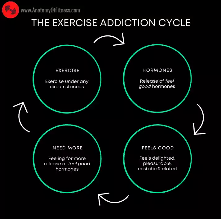 EXERCISE ADDICTION Cycle.