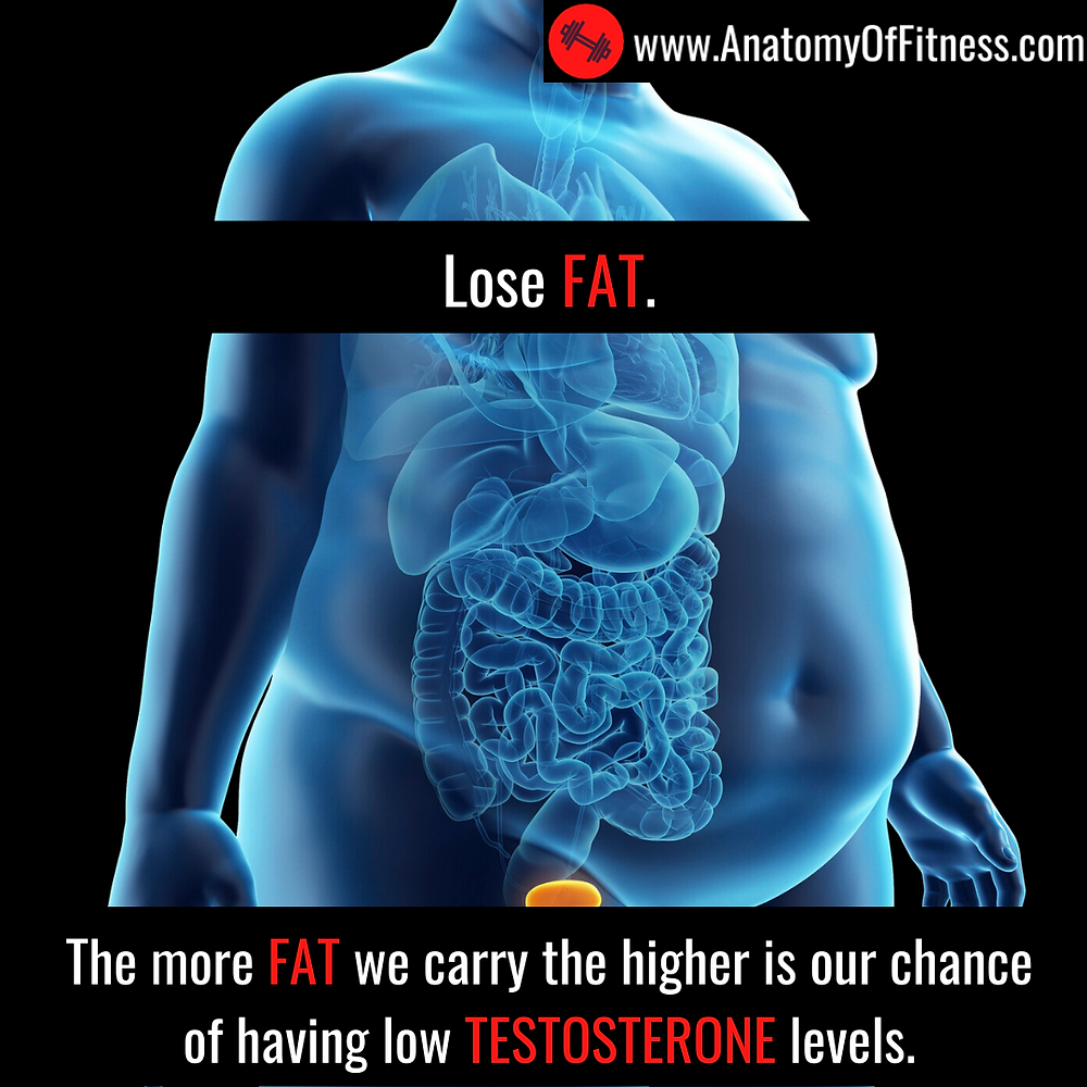 Excess BODY FAT reduces TESTOSTERONE production.