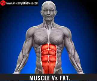 What is the difference between FAT and MUSCLE?