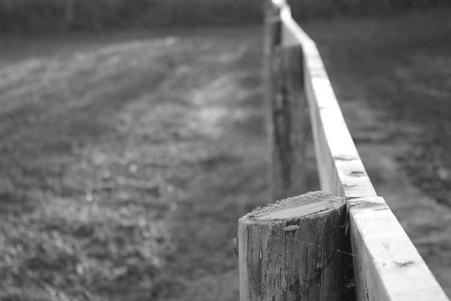 Fenced In (BW)