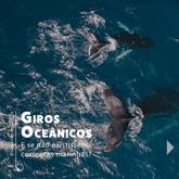 Correntes marinhas: os giros oceânicos