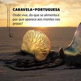 Caravelas-portuguesas:  de onde vêm?