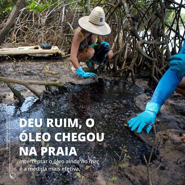 O oleo no nordeste | Mancha de petróleo entre as raizes do manguezal