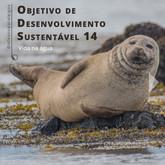 ODS 14, Década do Oceano e Cultura Oceânica