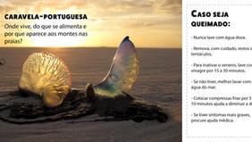 Caravelas-portuguesas:  o que é, onde vive e por que aparece aos montes nas praias?