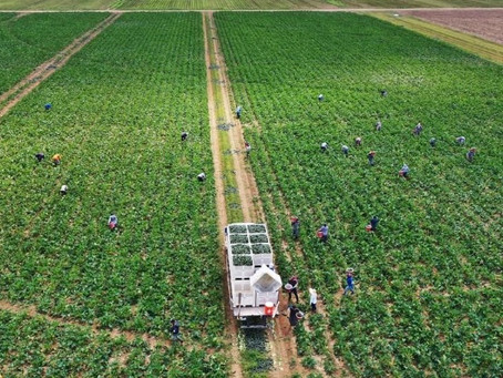 Palm Beach County leaders ask for rapid COVID-19 tests for farmworkers