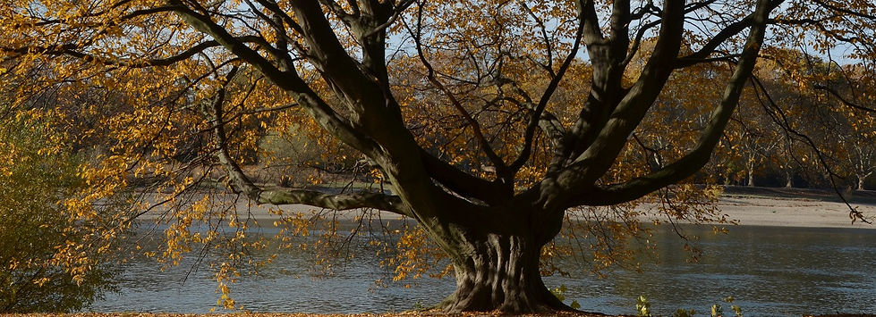 Herbstbaum_schmal.jpg
