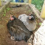 Ci-ci & Margo enjoying a rest