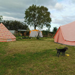 Pitch your own tent, our friendly Schnoodle dog Pip may pop down to say hello!