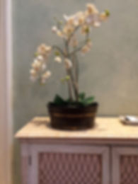 _____Orchid Image.jpg