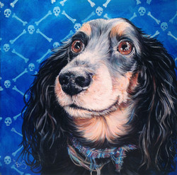 Medium sized dog portrait