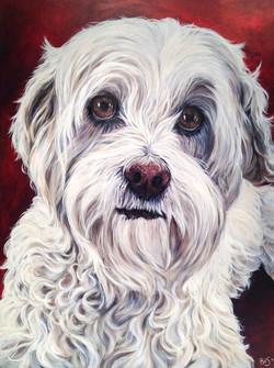 18 by 24 inch dog portrait