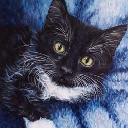 16 by 16 Cat Portrait