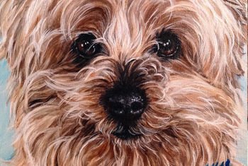 """12"""" x 16"""" Just Furry Face"""