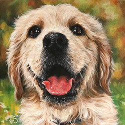 Medium portrait of a puppy