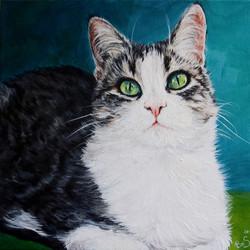 Medium cat portrait