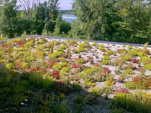 Green-Roof-Minnesota-Sedum-.jpg