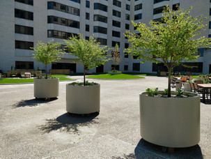 Trees-In-Planters-Artificial-Turf-Courty