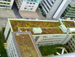 Green-Roof-Arial-View.jpg