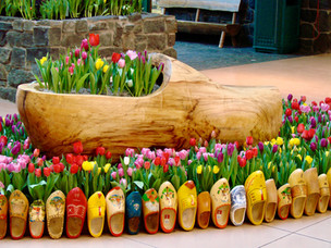 MOA-Flower-Show-Tulips-Wooden-Shoes-Clog