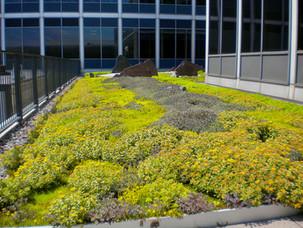 General-Mills-Green-Roof-Minnesota-Aloha