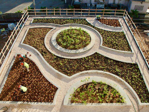 Guam-Green-Roof-Aloha-Landscaping.jpg