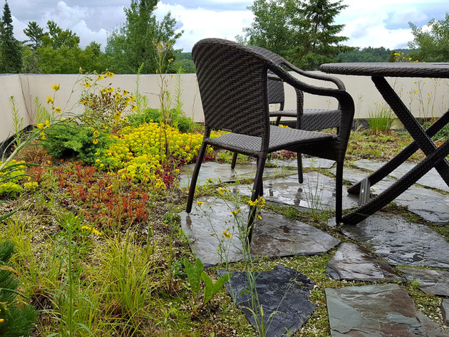 Northern-Minnesota-Green-Roof-Natural-St