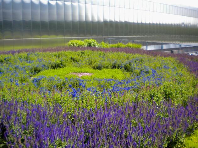 Green-Roof-Flowers-Minnesota-Aloha-Lands