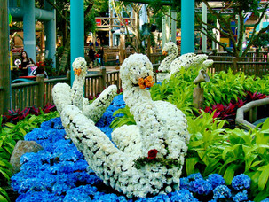 Topiary-Flower-Show-Swans-Mall-of-Americ