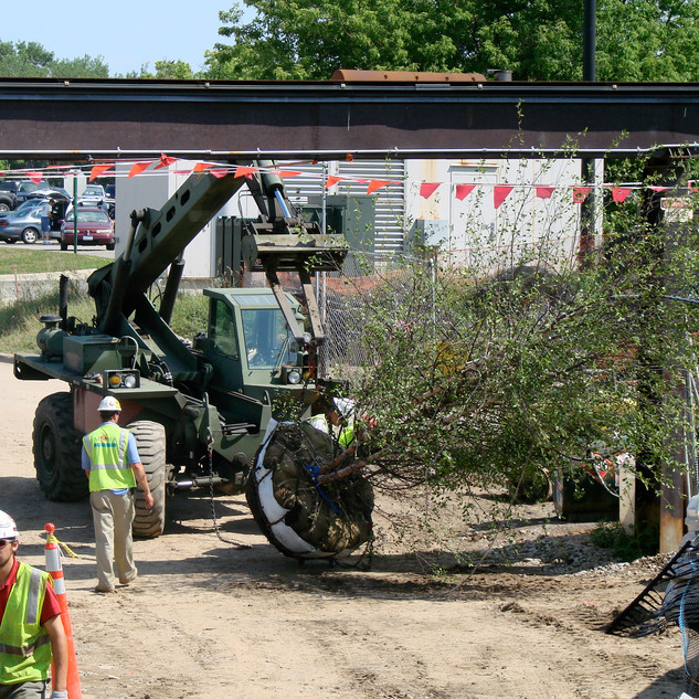 MN Zoo Tree Moving.jpeg
