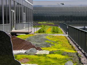 Green-Roof-Minnesota-General-Mills-Kinji