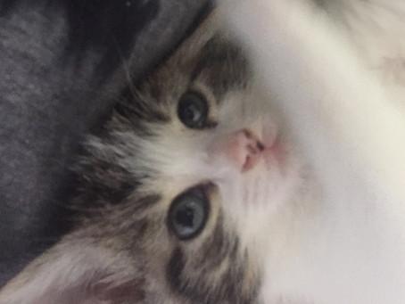 I Body Shamed My 4-Month Kitten. What Kind of a Monster Am I?