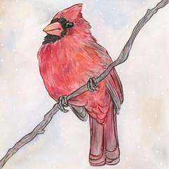 CardinalEDITED.jpg