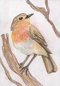 Robin(?)EDITED.jpg