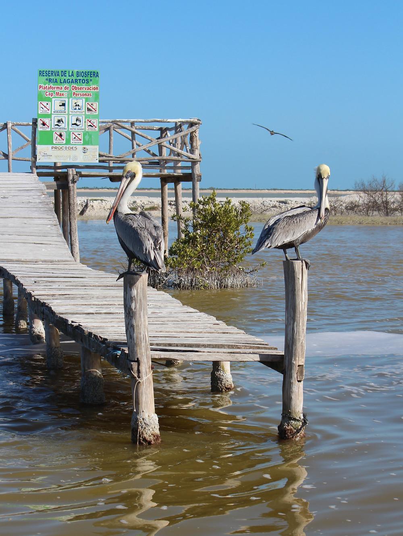 Rio Lagartos. Jukatanas. Meksika.
