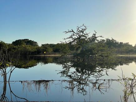 Rio Lagartos/ Krokodilų upė