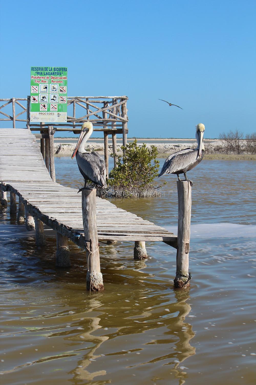 Rio Lagartos. Yucatan. Mexico